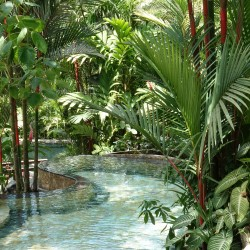 A tropical garden swimming pool - Costa Rica