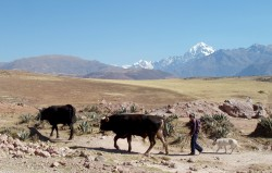 Traditional farming methods still prevail, the Sacred Valley,