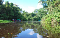 The serene waters of an Amazon backwater, Amazonian Peru