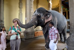 Receiving an elephant blessing in the temple, Madurai - Tamil Nadu